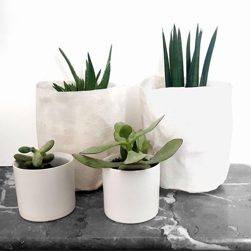 plantes d'interieur deco de succulentes