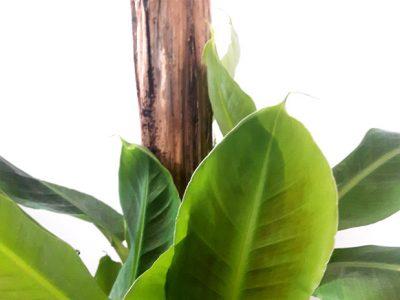 Des plantes d'intérieur tendances et robustes