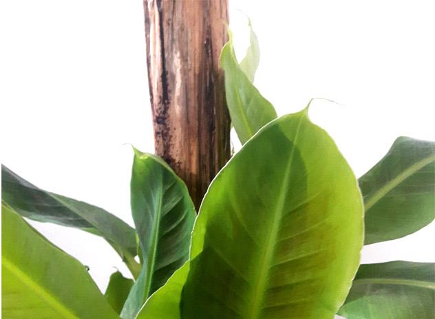 plantes interieur tendance