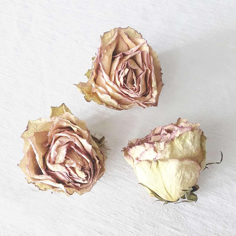 des roses sechees