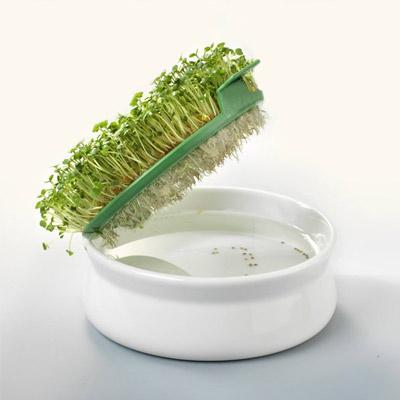 coupelle de germination de chez germline