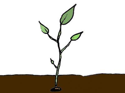Récolter ses propres graines potagères