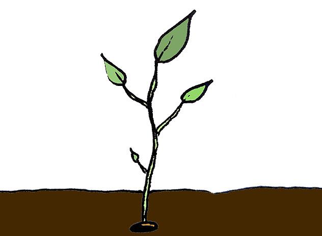 graines de semence