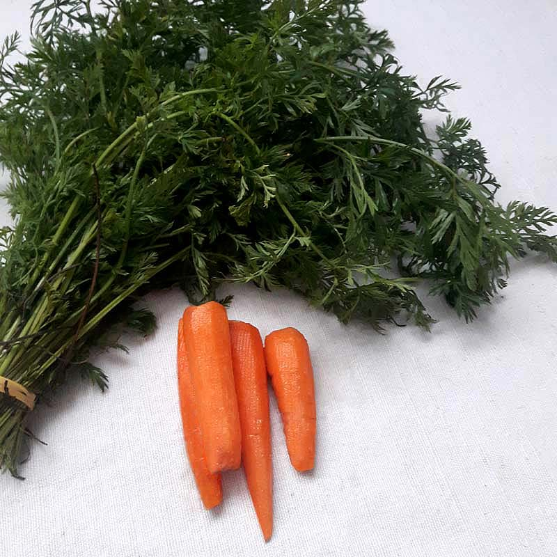 pesto fanes de carottes