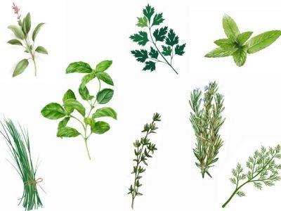 Les plantes aromatiques : quels bienfaits ?